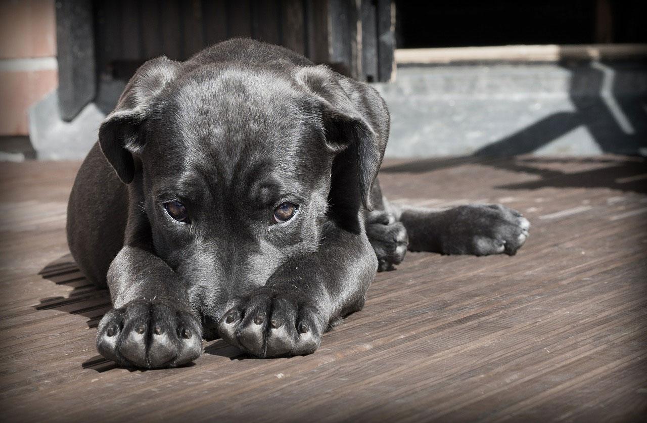 Twój pies ma pchły?