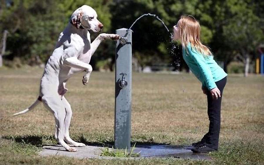 inteligentny pies