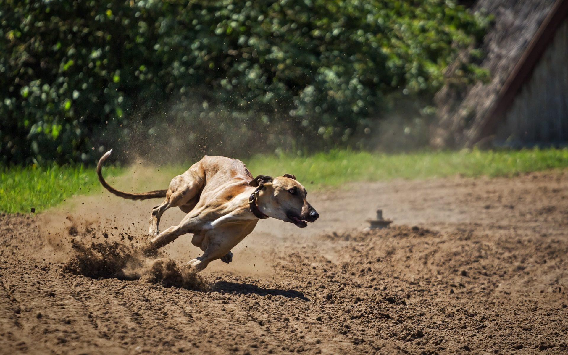 Psy dla aktywnych - Chart