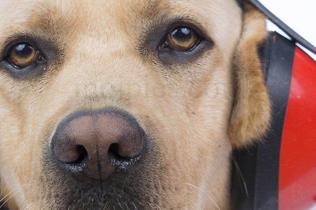 Pies w Sylwestra