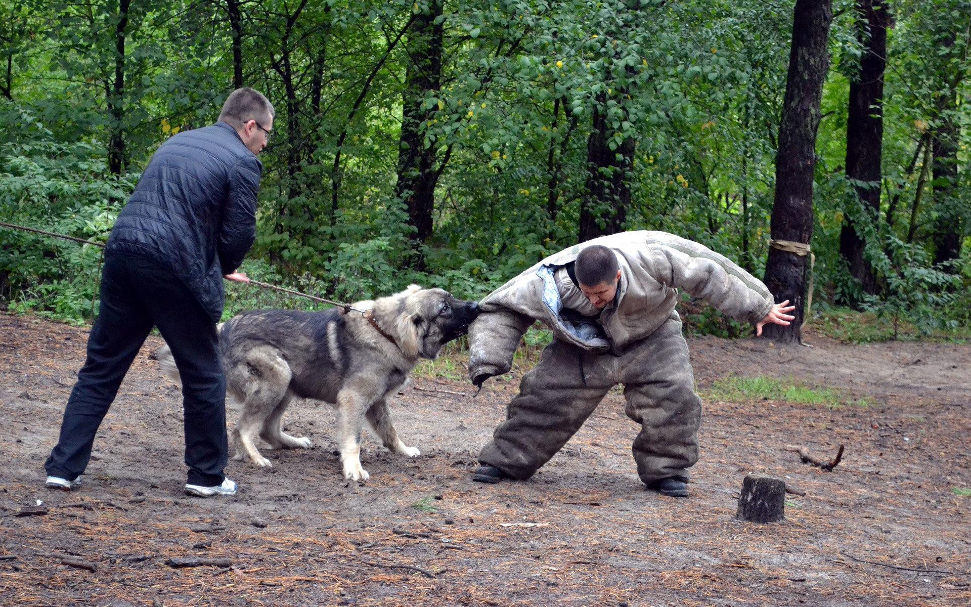 Szkolenie psa obronnego