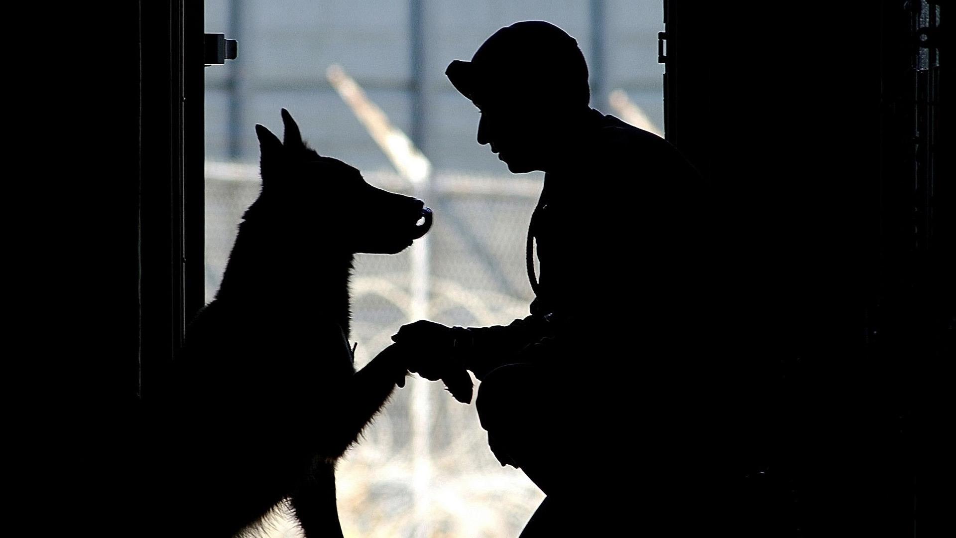 Pies w Służbie Celnej