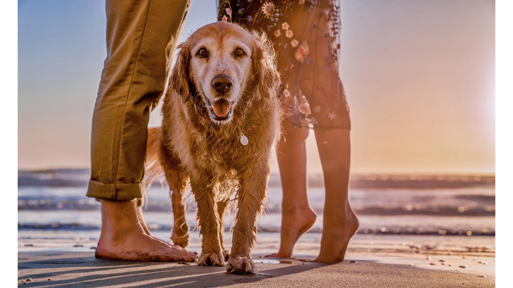pies na plaży w wakacje